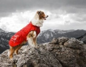 Hurtta Pet Collection Winter Jacket, Red