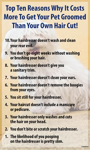 Top Ten Reasons Why It Costs More to Get Your Pet Groomed