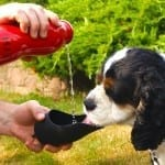 H2O4K9 Dog Water Bottle and Travel Bowl