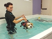 water rehabilitation for dogs