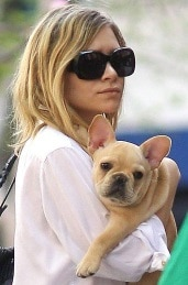 Mary-Kate Olsen with her Frenchie