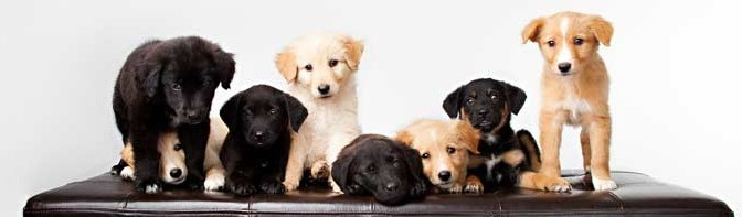 Our list of must have items for your New Puppy! Dogsized