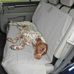 Petego Rear Car Seat