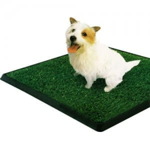 How to Choose an Indoor Dog Potty?