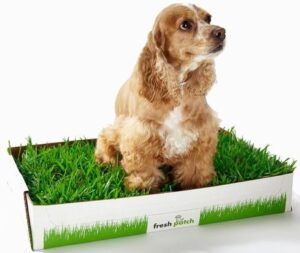 """Indoor Dog Potty—when it's inconvenient to """"go"""" outside Dogsized"""
