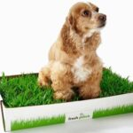 Dog Potty with Real Grass