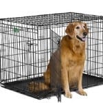 Double-Door Dog Crate