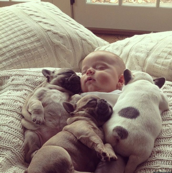 We hope your nap is as lovely as this one... Dogsized