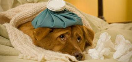 How to Help Your Sick Dog With Diarrhea Dogsized