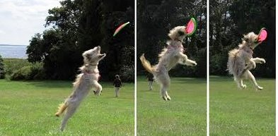 A Frisbee Your Dog Will Love! Dogsized