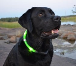 Top LED Dog Collars - easily see your dog at night Dogsized