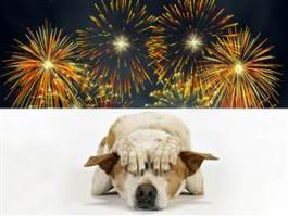 Dog Anxiety from Thunder or Fireworks? Dogsized