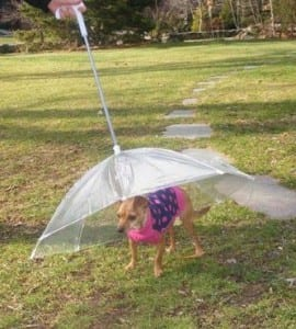 Why Should You Buy A Dog Umbrella? Dogsized
