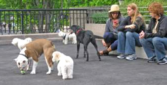 The Dog Park - Dos and Don'ts Dogsized
