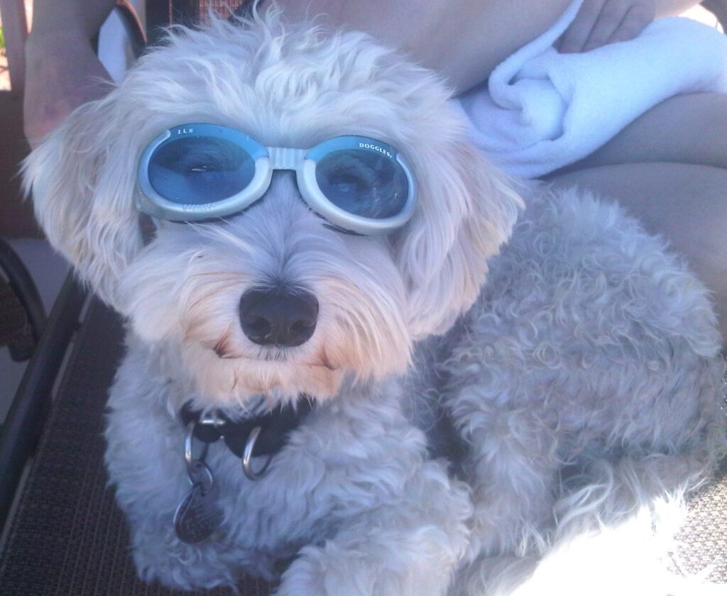 Dog Sunglasses - Eye Protection with Style