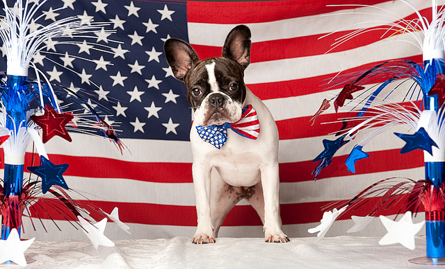 Happy July 4th from Dogsized! Dogsized