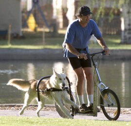 The Dog Powered Scooter Dogsized