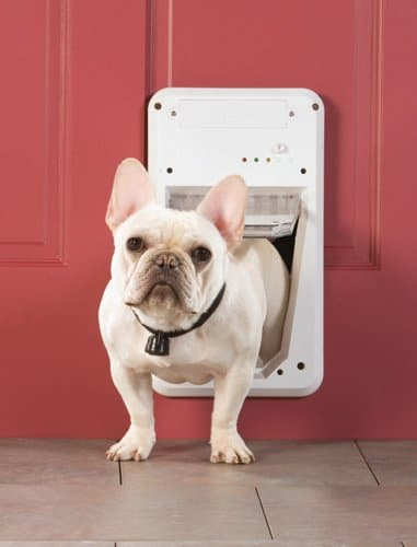 Automatic Dog Doors - So Only Your Dog Goes In & Out Dogsized