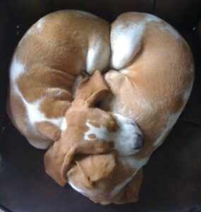 Looking for love? Check out this dog lovers dating site Dogsized