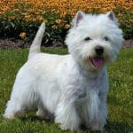 Top 10 Hypoallergenic Dogs for the City Dogsized