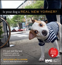 If you live in NY - your dog needs a NY dog license Dogsized