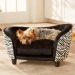 dog sofa - zebra