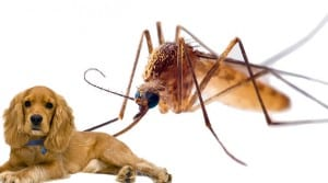 How to Help your Dog with Mosquitoes Dogsized