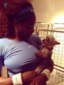 Serena Williams Yorkie supporting mama at the Roger's Cup Dogsized