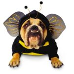 New Halloween Dog Costumes Dogsized