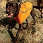 Ruffwear Climate Changer Fleece Jacket