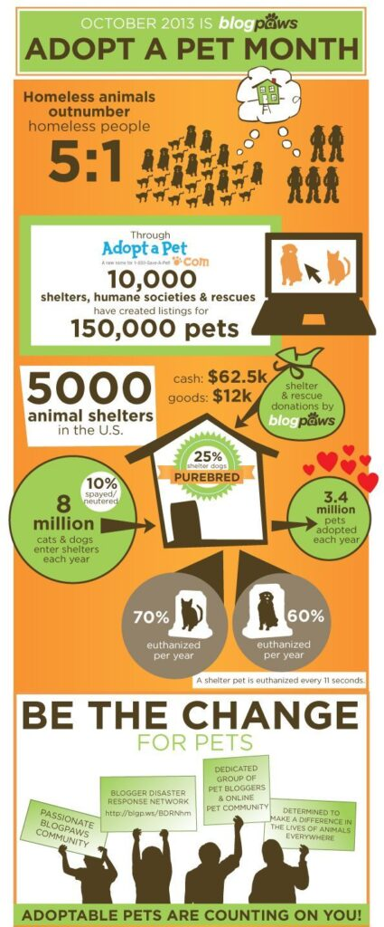 October is Adopt a Pet Month Dogsized