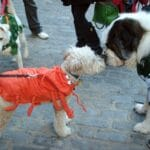 SeePaws Halloween Party Photos Dogsized