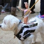 Tompkins Square Halloween Dog Parade Photos Dogsized
