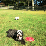 Country Dog Boarding - Vacation for Your Dog! Dogsized
