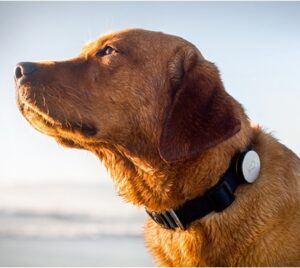 Whistle: New Tech Innovation for Your Dogs Health Dogsized
