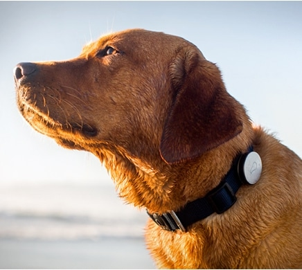 Whistle: New Tech Innovation for Your Dogs Health