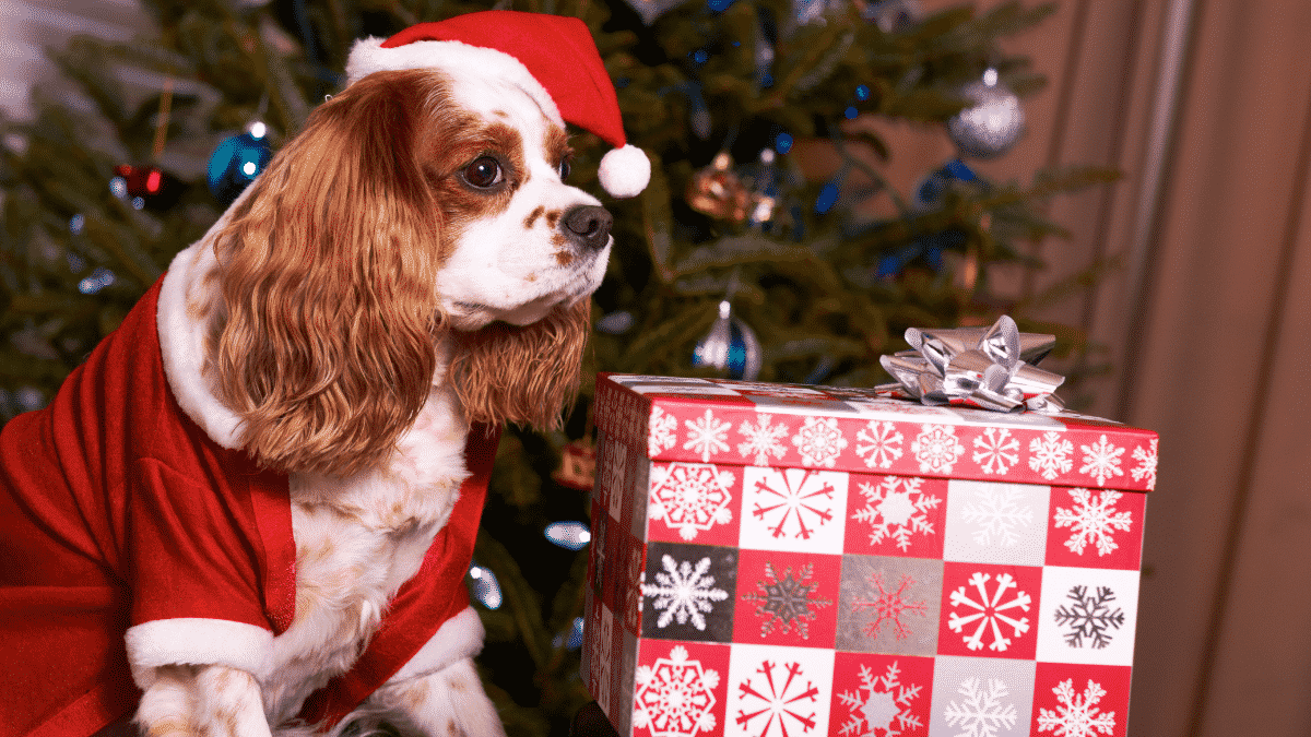 Top 20 Dog Gifts - 2013 Holiday Gift Guide