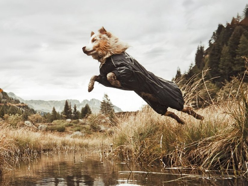 Hurtta - Amazing Dog Jackets and Outerwear