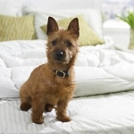 Our List of Top Pet Friendly Hotels Dogsized