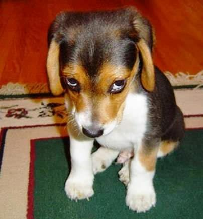 How to Clean Up Dog Urine from Carpet
