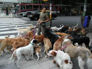 How to Find a Dog Walker Dogsized