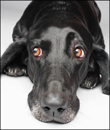Tips for Separation Anxiety in Dogs Dogsized