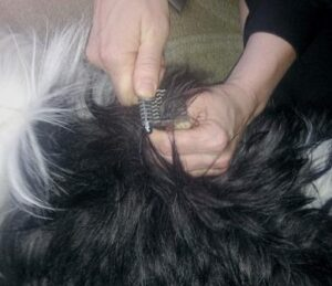 Dematting Your Dog Dogsized