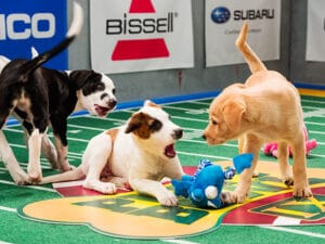 Puppy Bowl - Watch It Right Before the Super Bowl! Dogsized