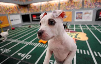 Puppy Bowl - Watch It Right Before the Super Bowl!