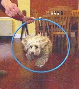 5 Indoor Games with Your Dog Dogsized