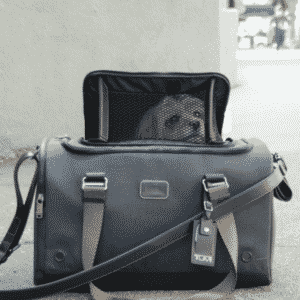 Jet Setting Dogs - Tumi Has Products for You!