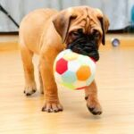 Indoor Games with Your Dog