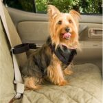 Dog Car Harness - Safety & Freedom for Your Dog Dogsized