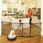 Top 5 Tips to Create a Pet Friendly Home Dogsized